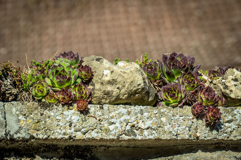 Close-up of plants growing on rock against wall