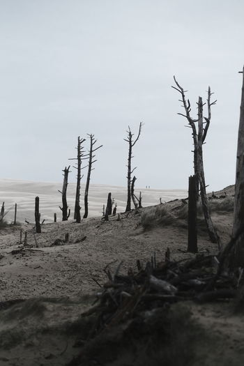 Bare trees on beach against sky