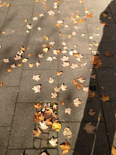 My Shadow Autumn Leaves