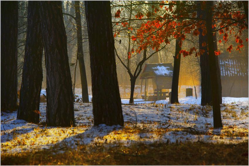 Mood and impressions Ambience, Lake, Landscape, Nature Outdoors Peace, Season  Time, Tree