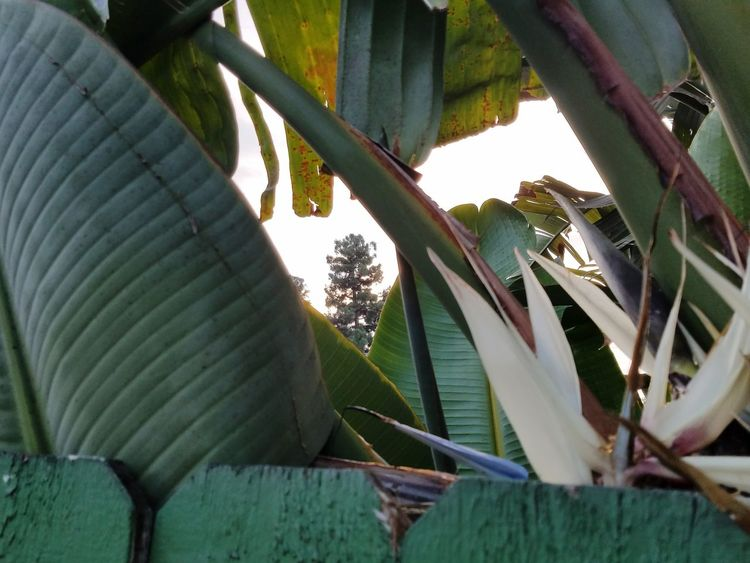 Peek-a-boo EyeEmNewHere Up Close Green Plant Peeking Through