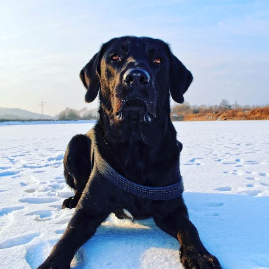 Portrait of dog on snow covered field