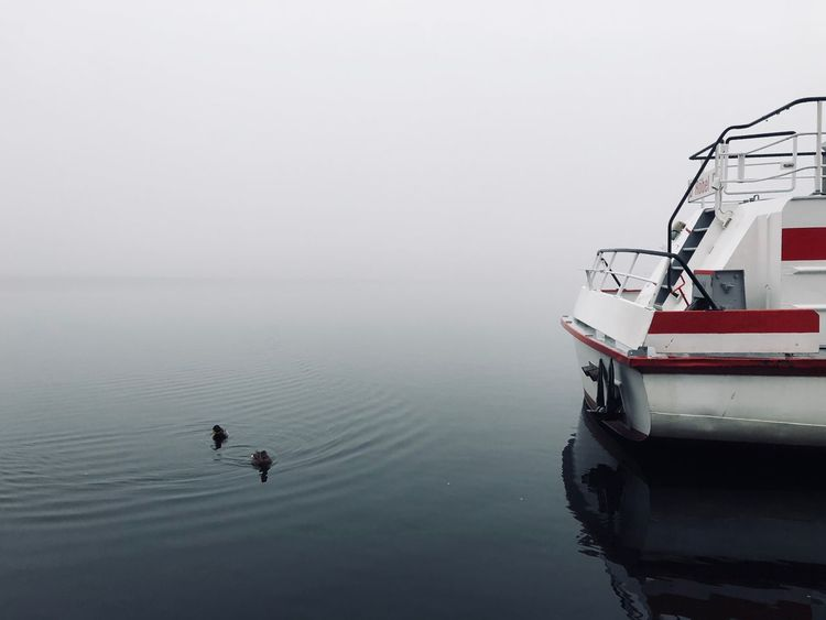 A foggy winter afternoon at Germanys second largest lake: Müritzsee Off Season The Week On EyeEm No People Tranquility Lake Outdoors Nature Foggy Day Foggy Ship Harbour Wintertime Müritzsee Müritz Quiet Moments Melancholy Ducks At The Lake