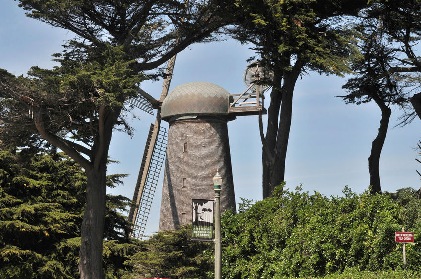Dutch Windmill @ Golden Gate Park 7 San Francisco CA🇺🇸 North Windmill Dutch Windmill Built 1903 Western Edge Golden Gate Park 95 Ft. High 114 Ft. Sails Pumped 30,0000 Gallons Per Hour Irrigated The Park Wind Power Alternative Energy Engineering Marvel 1913 Replaced By Electric Pumps Fell Into Disrepair By 1950's In State Of Ruins Restoration Began 2000 Completed 2012 Landscape Cypress Trees  Windmill_Collection Windmill Photography Landscape_Collection Designated Landmark No. 147 Windmill Landscape_photography Water Pump Traditional Windmill