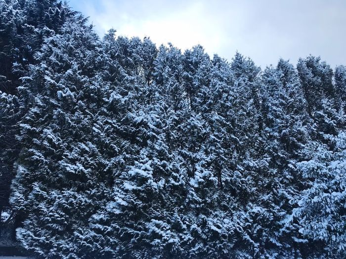 Snowy Nature Winter Snow Cold Temperature Weather Beauty In Nature Tree Full Frame No People Backgrounds Scenics Day Outdoors Low Angle View Tranquility Sky Close-up