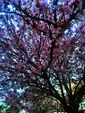 Spring has sprung 🌸 Tree Plant Low Angle View Branch Growth Beauty In Nature Full Frame