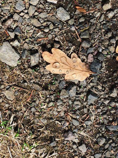 Leaf Day Plant