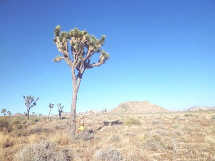 In love with Joshua Tree <3 Check This Out That's Me Hello World Relaxing Enjoying Life Amerika USAtrip USA America Joshua Tree Joshua Tree National Park