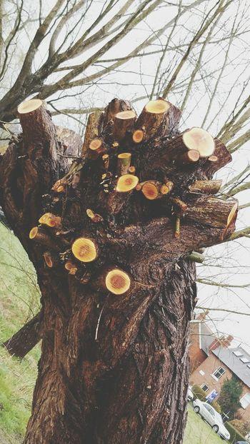 Fresh Cut Tree Rings