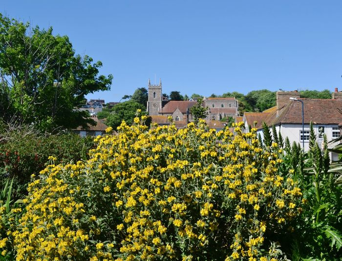 Yellow Flowers Blooming By House Against Clear Sky