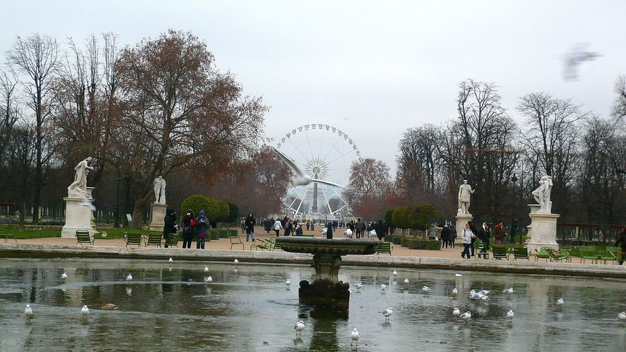 Jardin Des Tuileries Paris Winter Big Wheel Cold Weather Birds Walking On Ice Water France Fountain Statues Bird Flying Trees Adapted To The City Neighborhood Map