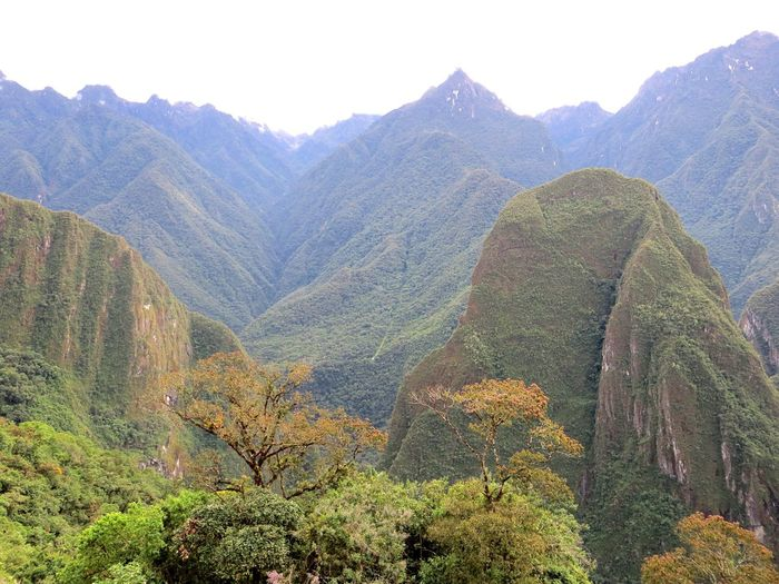 Mountain Mountain Range Nature Beauty In Nature Scenics Tranquil Scene Landscape Tranquility Plant Outdoors Day Tree No People Sky Inca Ruins Peru Travel Destinations Machu Picchu