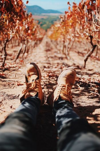 Path Low Section Human Leg Personal Perspective Shoe Real People One Person Human Body Part Nature Day Outdoors Standing Men Lifestyles Beauty In Nature Tree Close-up People