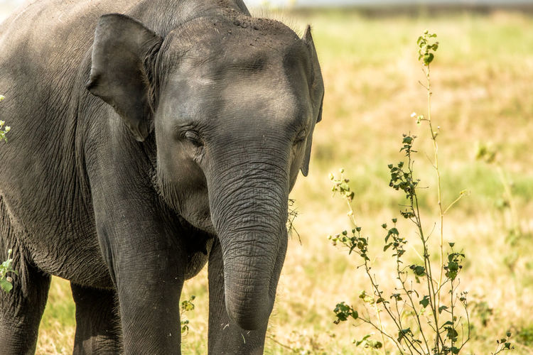 Elephant on landscape