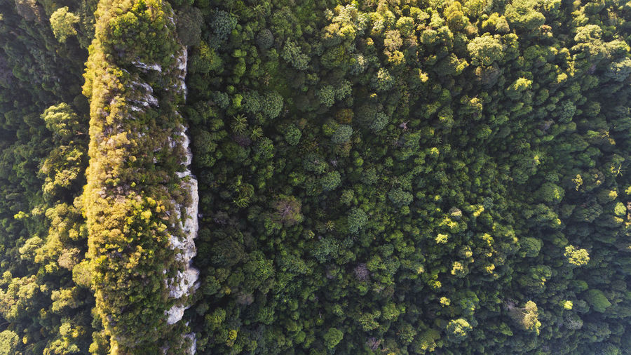 Beautiful green and yellow foliage of rain forest. Backgrounds Beauty In Nature Close-up Day Forest, Aerial, Green, Nature, Landscape, Tree, View, Above, High, Summer, Day, Outdoor, Season, Woods, Park, Natural, Environment, Travel, Foliage, Horizon, Valley, Trees, Drone, Texture, Rural, Fresh, Wild, Wilderness, Plant, Serene, Water, Area, Large, Full Frame Green Color Growth Moss Nature No People Outdoors Textured  Tree