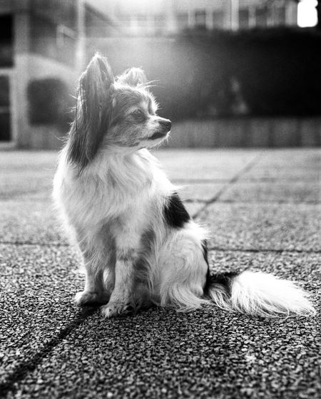 Dog looking away while sitting on street