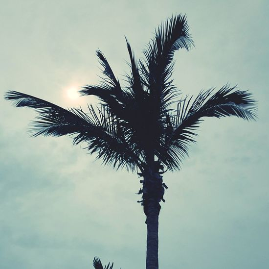 Cloud - Sky Outdoors Beauty In Nature Dramatic Sky Barrier Island Island Life Eyeemphotography Tree Palm Tree Tree Trunk Low Angle View Sky Silhouette No People Day Nature Branch Beauty In Nature