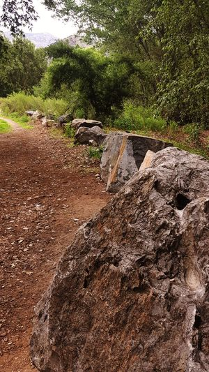 There Might be Giants Nature Photography Road Boulder - Rock Wooded Path Tree Textured  Sand Backgrounds Full Frame Close-up Road Marking Roadways Mountain Road Country Road Empty Road Growing
