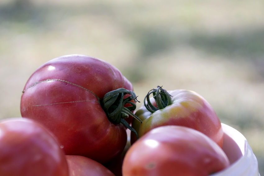 Close-up Day Focus On Foreground Food Food And Drink Freshness Fruit Green Color Healthy Eating Nature No People Organic Outdoors Raw Food Red Ripe Selective Focus Still Life Tomato Vegetable Wellbeing