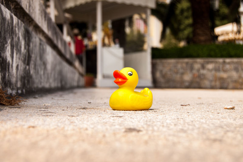 Close-up of rubber duck on street