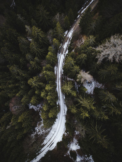 Snowy road cutting the forest in half. Tracks Mountain Tree Trees Road Snow Winter Forest Austria Austrian Alps Djimavicpro Drone  Day Dronephotography EyeEmNewHere EyeEmNewHere EyeEmNewHere