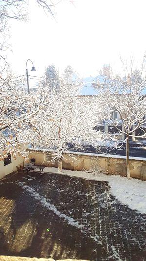 Snow ❄ Sky No