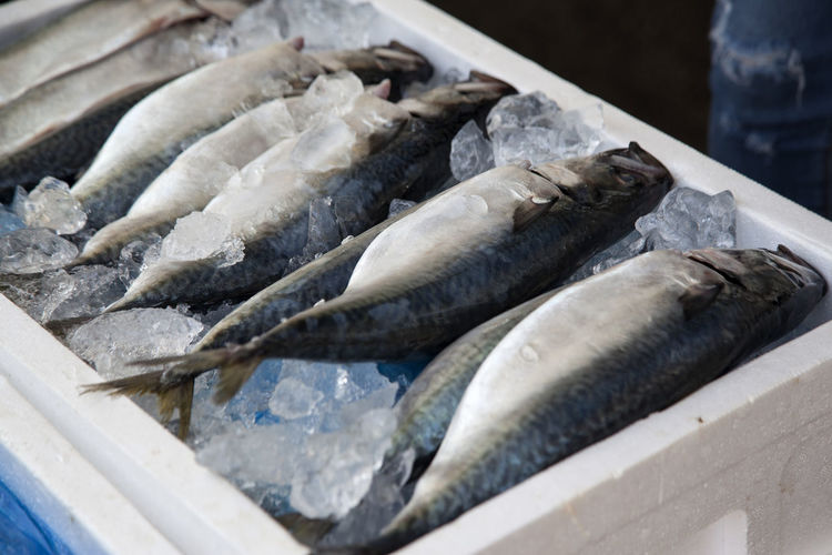High angle view of fish with ice in container for sale at market stall