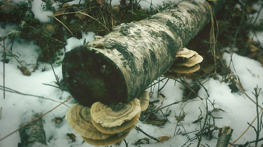 Close-Up Of Tree Branch With Fungus On Snow Covered Field