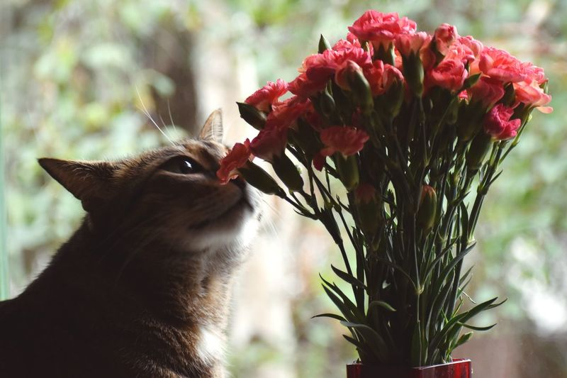 Close-up of cat on flower