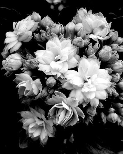 Spring in a flower pot Spring Flowers Spring Blackandwhite Poland Flowers First Eyeem Photo Kalanchoe EyeEm Nature Lover Eyeemphotography