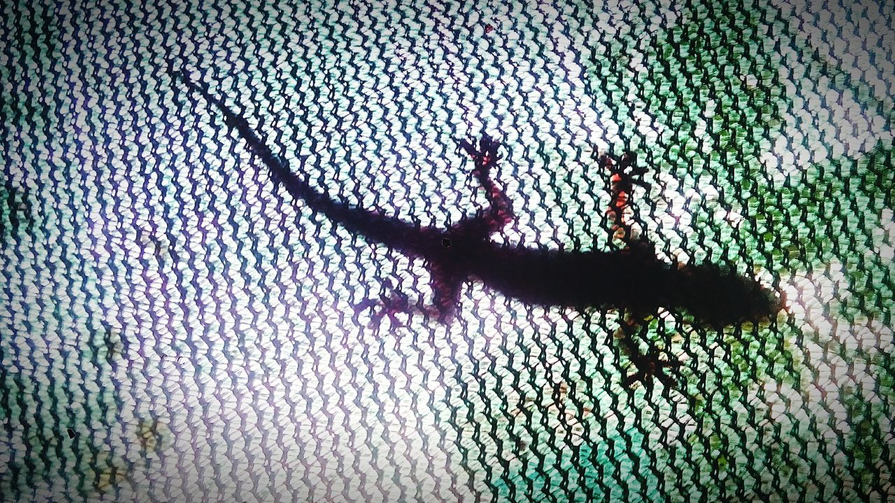 animal themes, one animal, animals in the wild, shadow, lizard, day, animal wildlife, reptile, green color, insect, sunlight, no people, outdoors, nature, close-up