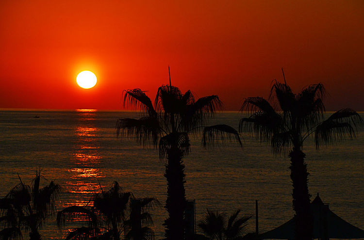 Alanya Mediterranean  Sunset_collection Beauty In Nature Clear Sky Horizon Over Water Landscape Nature No People Orange Color Outdoors Palm Tree Palmsprings Scenics Sea Silhouette Sky Sun Sunset Tranquil Scene Tranquility Tree Water