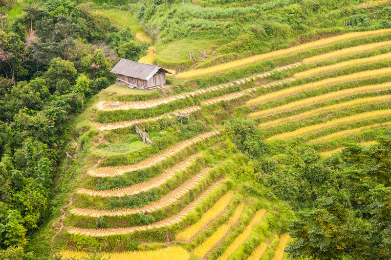 Rural Scene Landscape Scenics - Nature Agriculture Plant Growth Field Farm Environment Tranquil Scene Green Color Land Terraced Field Rice - Cereal Plant Rice Paddy Terrace No People Nature Pattern Rice Outdoors