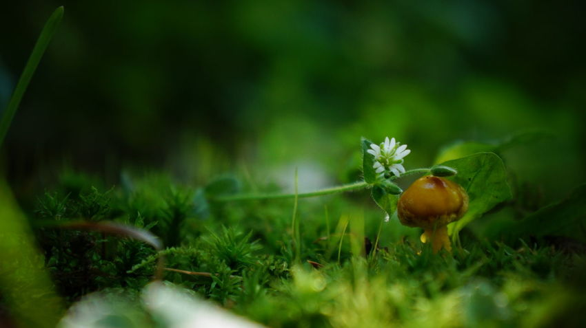 Beauty In Nature Blooming Close-up Day Flower Fragility Freshness Green Green Color Growth Mushroom Nature New Life No People Non-urban Scene Plant Scenics Selective Focus Small Surface Level Tranquil Scene Tranquility Uncultivated Wilderness Wildflower