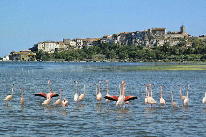 Animals In The Wild Architecture Bird Medium Group Of Animals Sea Water Waterfront Wildlife