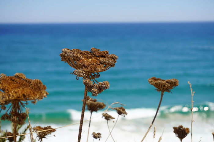 Beauty In Nature Close-up Day Growth Holiday Horizon Over Water Nature No People Outdoors Plant Scenics Sea South Africa Tranquility Water
