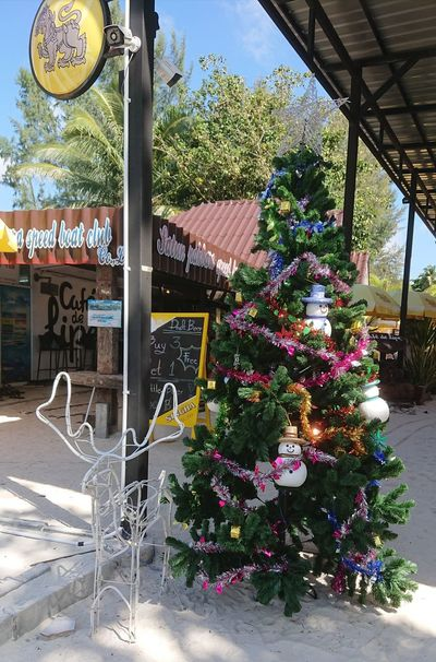 Merry Christmas🌴🌴🌴 MerryChristmas Wishes Tropical Happy Holidays! Happy :) Koh Lipe Flower Greenhouse Tree Sky Architecture Building Exterior Christmas Ornament Christmas Decorating The Christmas Tree Christmas Market Santa Claus Christmas Present Christmas Bauble christmas tree Christmas Decoration Christmas Lights Candy Cane