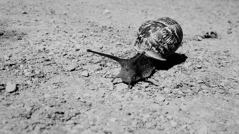 Just snail life Androgyne Animal Wildlife