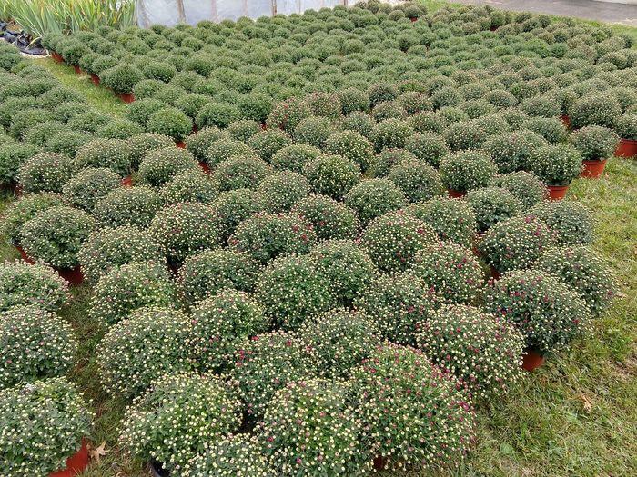 Tree Field Full
