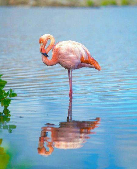 Colour Of Life Flamingo Photography Photographer Canon Lovelive Naturelover River Cleawater