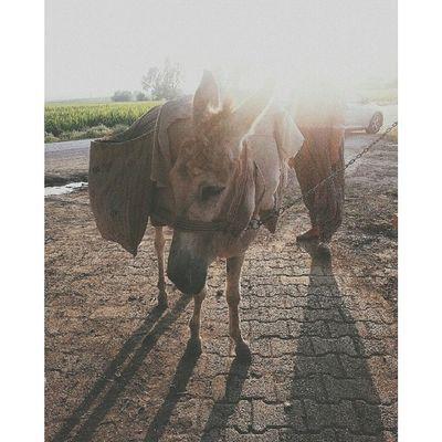 Küçüklük ingilizcesi; hello donkey ?? Donkey Eşek Sunshine VSCO vscocam animal animallove vscoanimal instaanimal vintage