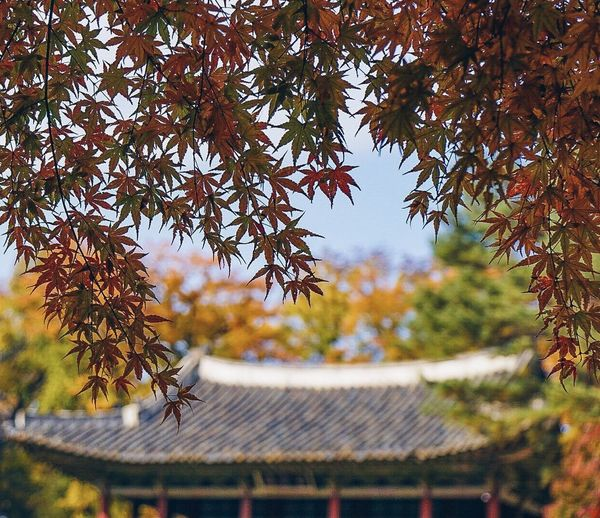 Autumn Change Leaf Tree Roof Day Nature Outdoors Beauty In Nature No People Architecture Growth Sky