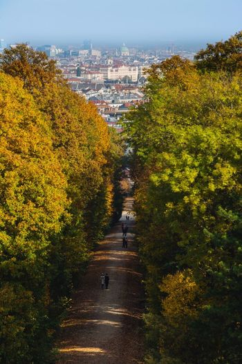 Tree The Way Forward Road Autumn Yellow Outdoors Change Nature From My Point Of View From Above  The City Down Below Urban Nature Urban Escape Road Way Real People Walking Walking Around Fall Beauty Fall Colors Autumn Trees City Escape Vienna Schönbrunn Looking Down