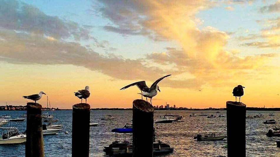 Seagulls in Marblehead Boston, Massachusetts No People Urban Skyline Outdoors Sky Cloud - Sky Sunset_captures