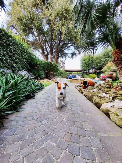 View of a dog on footpath