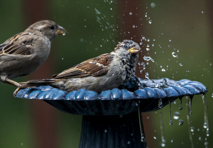 Close-Up Of Sparrows Perching On Fountain