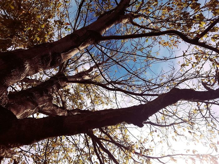 Tree Low Angle View Nature Sunlight Outdoors No People Beauty In Nature Sky Tranquility Green Color Cloud - Sky Autumn