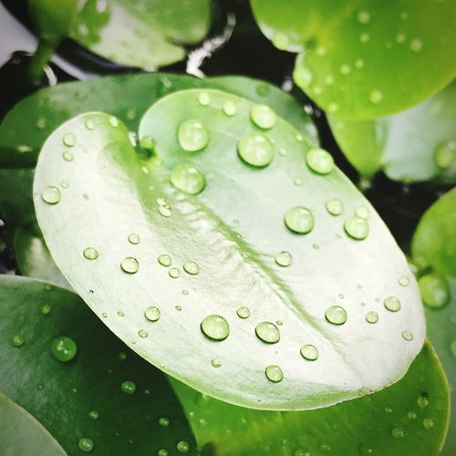 Drop Water Leaf Wet Nature Freshness Close-up Beauty In Nature Fragility Growth Rain RainDrop Droplet Day No People Outdoors Plant Green Color Purity IPhoneography After Rain!💧💧 In The Garden🌳🌱