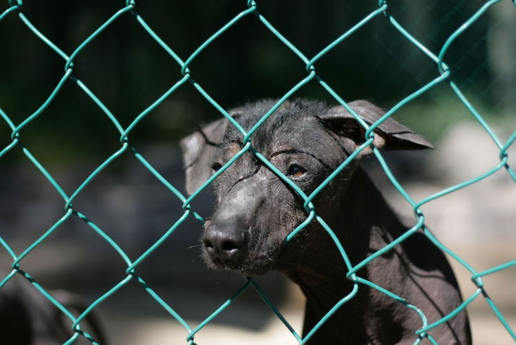 Close-up of puppy looking through chainlink fence