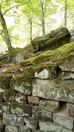 Day No People Outdoors Nature Trees And Nature Wall Stones Structure And Nature Forest Green Color Tranquility Moss-covered Mossy Stone